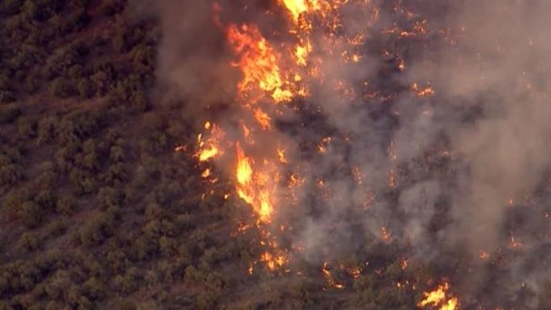 只能和狗睡车里 亚利桑那州爆山火居民紧急撤离
