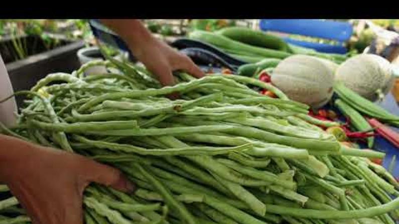 【德州田园生活】你家豆角丰收了吗?可以做酸豆角和干豆角啦,动手试试吧