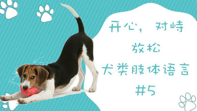 【林小Jim】犬类肢体语言一���Z�Q�不�囗�起:开心,对峙,放松