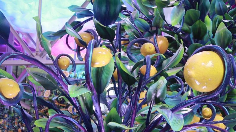 """夏日小清新""""柠檬树""""装点纽约市 民众:都能闻到柠檬香"""