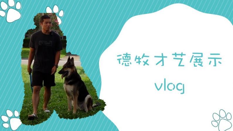 【林小Jim】德牧才艺展示 下班后训练Vlog