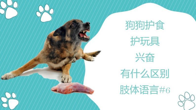 【林小Jim】狗狗不同的身体语言,你会辨别吗?