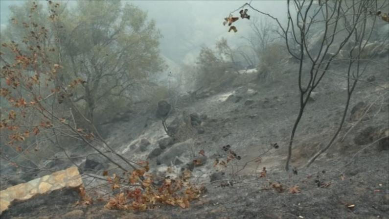 加州又一山火延烧2.5万英亩 消防员急护珍贵红杉树林