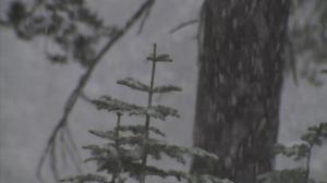 银装素裹 加州太浩湖落下本季第一场雪