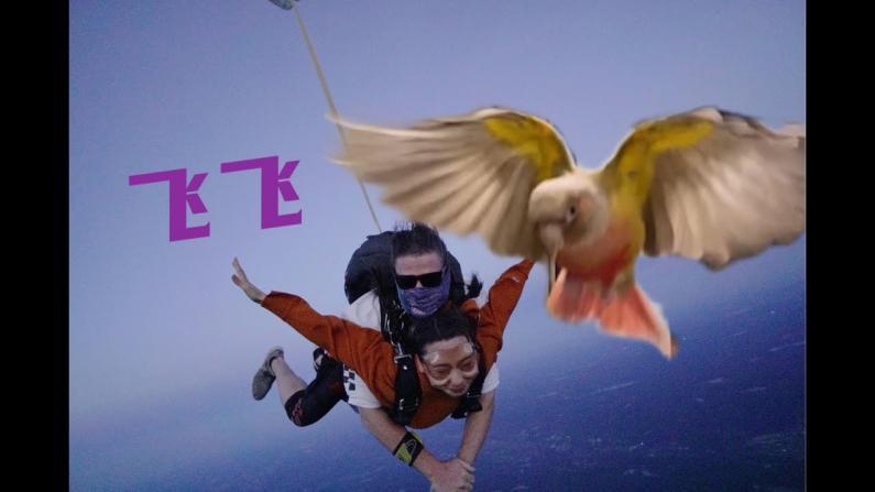 【珊珊和皮皮】人类飞行VS鹦鹉飞行