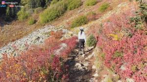 【桑妮歪歪】硬核爬山看秋叶 国家公园遛个弯