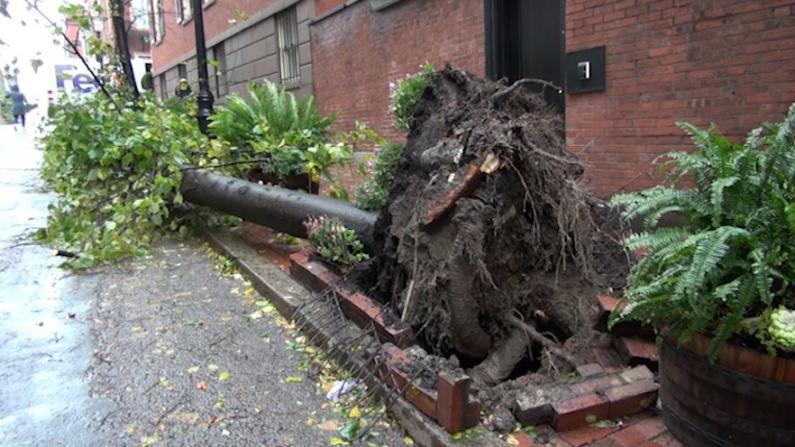 东北风暴侵袭麻州 约50万户居民停电